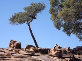 mutawintji heritage tours top engravings tree