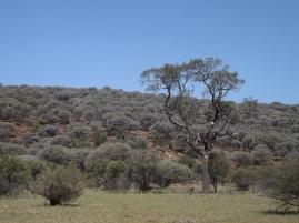 mutawintji heritage tours landscape hill