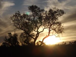 mutawintji heritage tours sunset