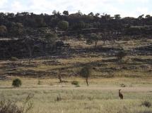 mutawintji heritage tours panorama horizon and roo