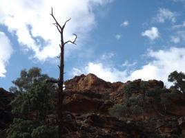 mutawintji heritage tours mutawintji gorge tree