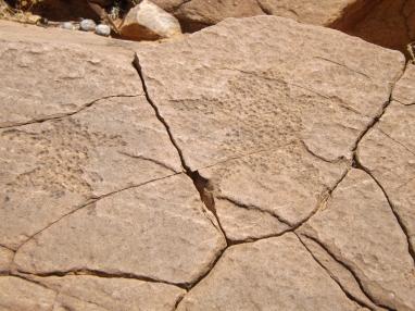 mutawintji heritage tours mutawintji engravings 3