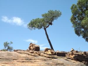 mutawintji heritage tours panorama horizon and tree